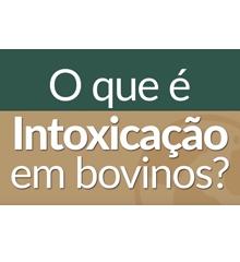 JA Online - INTOXICAÇÃO BOVINA