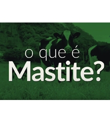 JA Online - Mastite Clínica x Mastite Ambiental