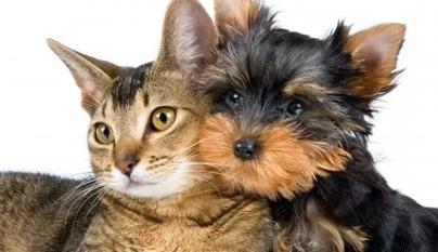 Sarna contagiosa em cães e gatos