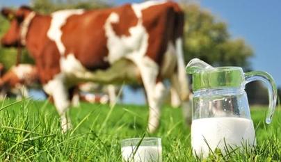 Cetose: doença comum no gado leiteiro de alta produção