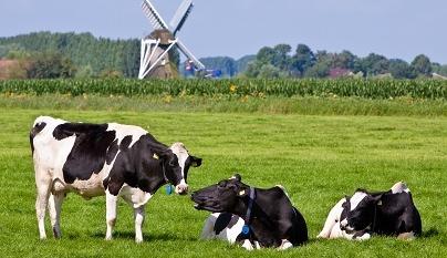 Desafios do leite latino-americano