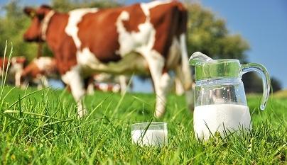 Como a alta da arroba tem influenciado o mercado de leite?