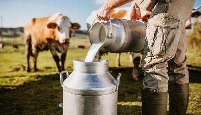 Eficiência técnica e econômica na produção de leite
