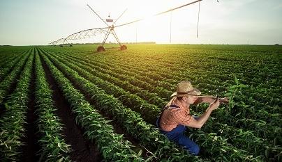 Brasil gasta cada vez menos com o agro, diz estudo